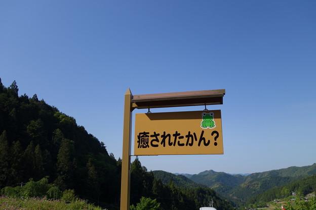 四谷の千枚田